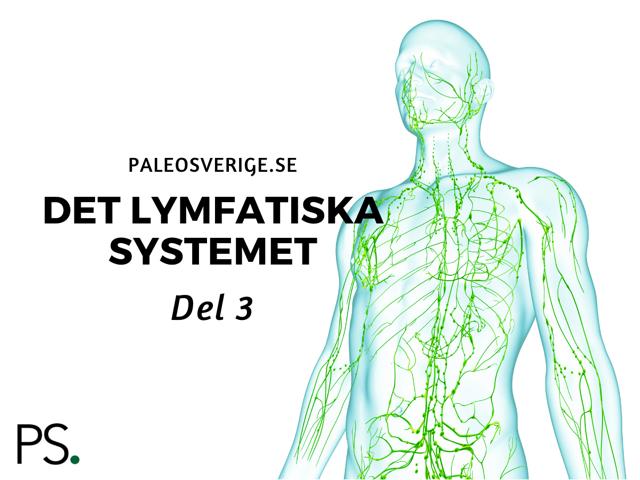 Det lymfatiska systemet – del 3