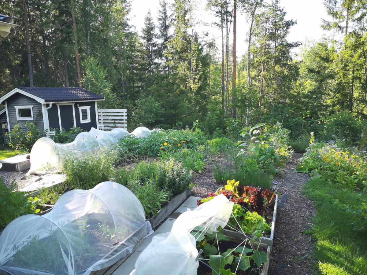 grönsaker-örter-och-blommor-i-trädgårdsskafferiet-sommaren 2020